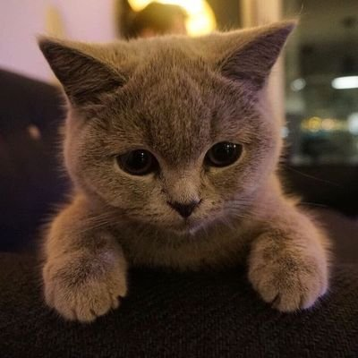 Cats | Kittens | More Cats (@CatandDoglover8 )