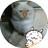 (猫ラブ)🐈ぎっちょん🐈(赤バブ) (@55ki55ki)
