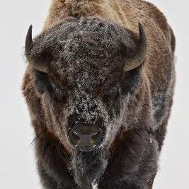 buffalojumper07