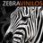 ZebraVinilos