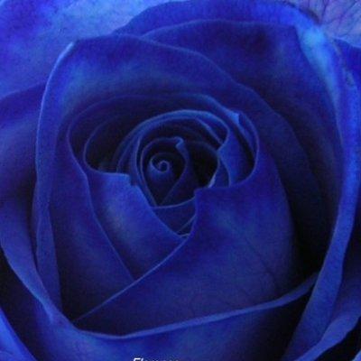 roseble67640876