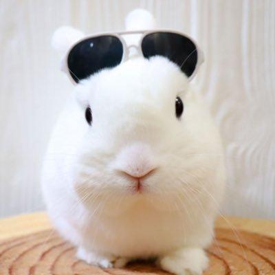 Rabbit Castle 〜うさぎのお城〜