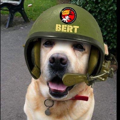 Bert - the Bear! 🌈