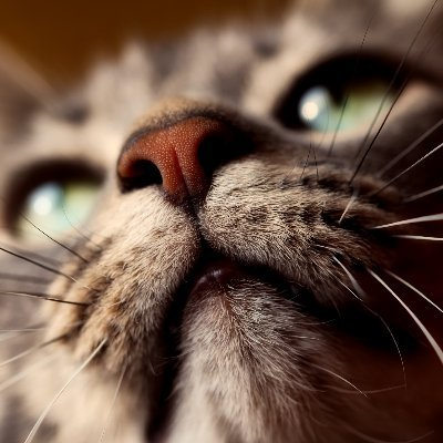 Balearic ➰ Meow