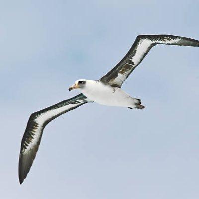 albatross_35