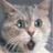 Mathmew Purrrr Oh! (@maxthesilent) Twitter profile photo