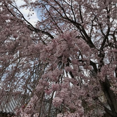如月冬美さんのプロフィール画像
