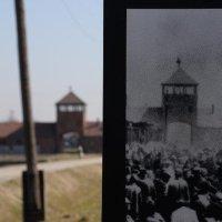 Auschwitz Memorial (@AuschwitzMuseum )