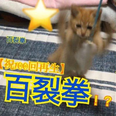 マロン【にゃんちゅ〜ば〜🐈】