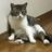 @KazuhiroDayon Profile picture