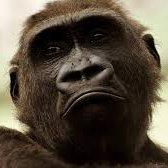 Anomalous monkey