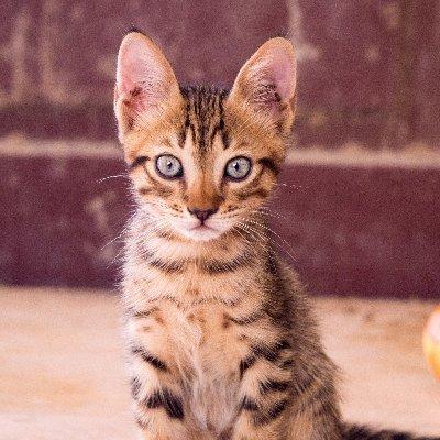 Cat's Meow Pet
