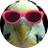 イトウアヤカは腹黒鳥。のアイコン