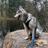 @DornaldTrump Profile picture