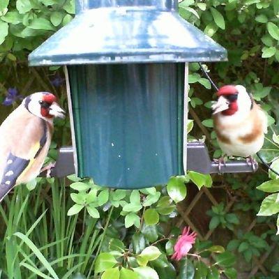 Birdfeedercam