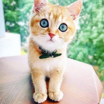 Sweety Kitttyy