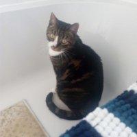 BH Apollo the Cat owner ( @GreenBagOG ) Twitter Profile