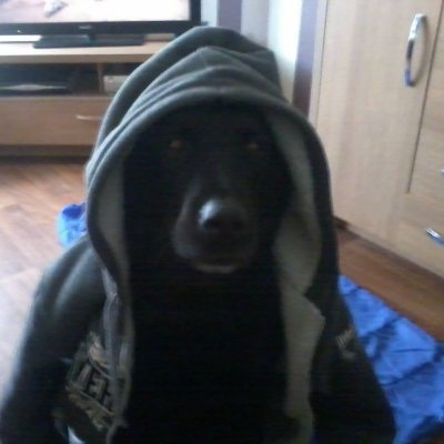 The Hooded Dog.