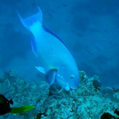 ParrotfishResearch