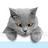 Kedi twitter profile