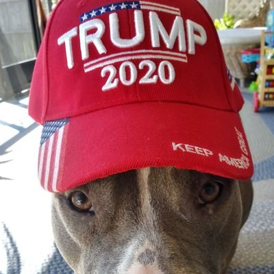 💥👉Red Hat Pitbull👈💥 KNOWS