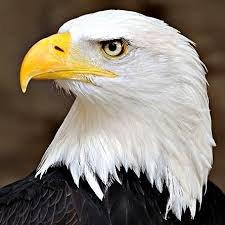 """Μαύρος Αετός on Twitter: """"Αν αναρωτιέστε γιατί τον αετό τον βγάζουν  φωτογραφία προφιλ ,,,, ορίστε η απάντηση… """""""