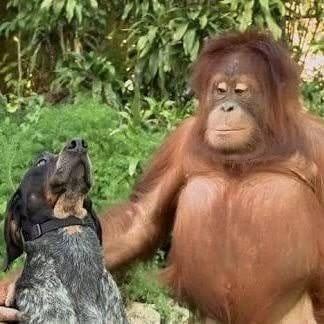 Nature and Animals 🌴