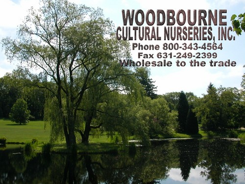 Wholesale Nurseries On Long Island Ny