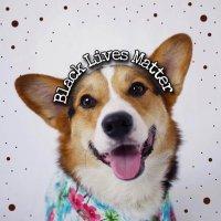 ᴘᴀᴠʟᴏᴠ ᴛʜᴇ ᴄᴏʀɢɪ 🐶 @PAVGOD Profile Image