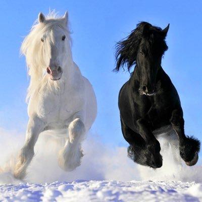 A Horse named Q ♞