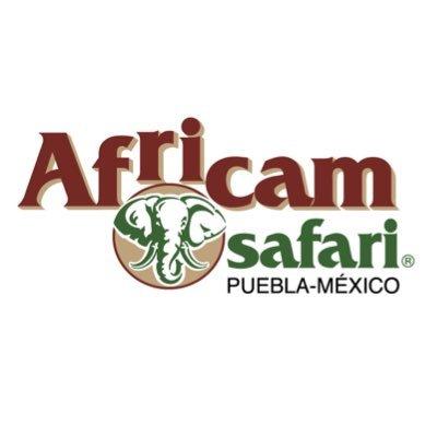 @AfricamSafari