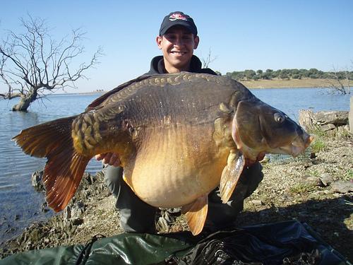 Carpa ramona carparramona twitter for Sierra fish in english