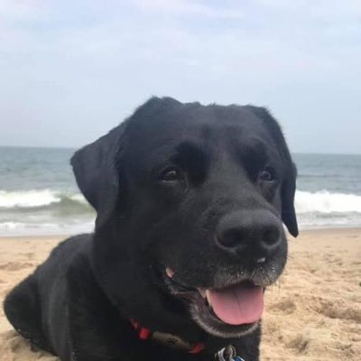 betting labs for rescue