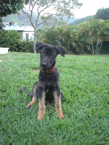 Dogs in Brazil Social Profile