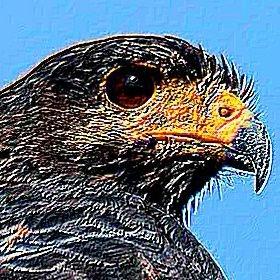 BlackHawk 🦧🐒🦍🐧🦇🦥