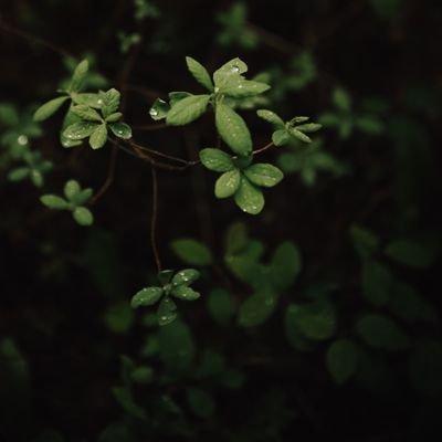🌿Дождик хвойный🌿 (@coniferous_rain)