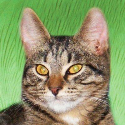 Я, вдова моего кота (@Olga_Boot)