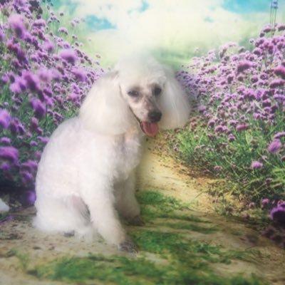 Vanity Fur Mobile Holistic Dog Grooming