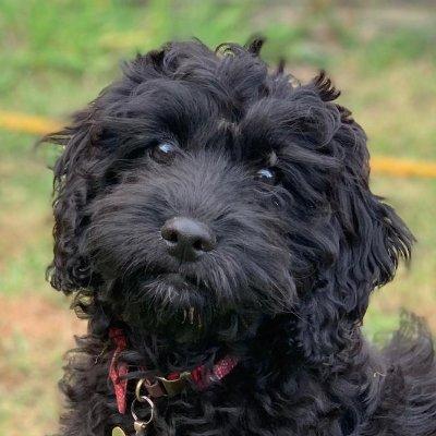 Bonnie The Rescue Dog