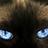 Feline_Fatale