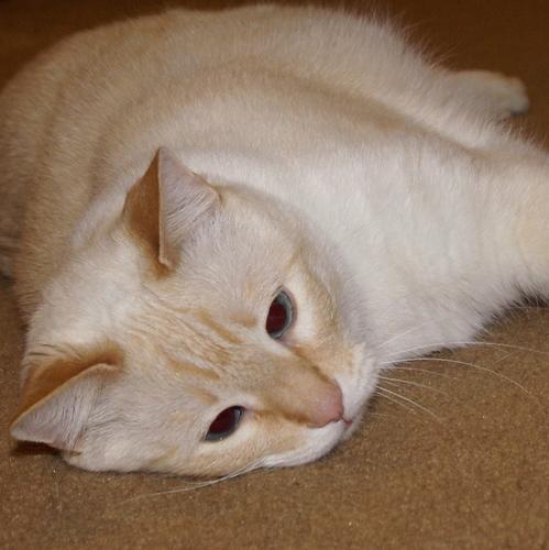 Tuffy the Cat