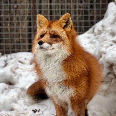 Lis Fox Rock (@Hellisabat)