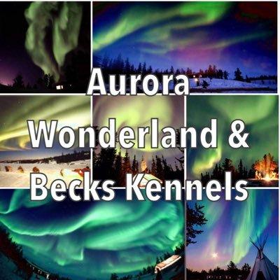 aurora wonderlandtours