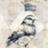 HarrietMagpie's avatar