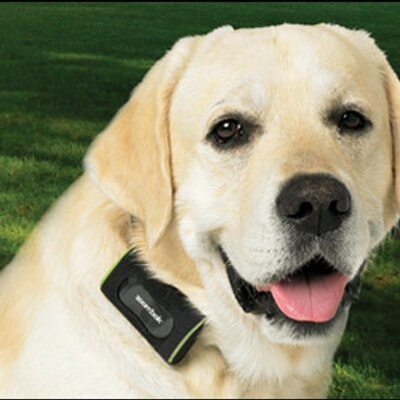 101493 Why Some Men Prefer Dogs Instead Of Women besides Best Gps Watch For Kids Ilepo Review as well Tractive in addition 221656494803 furthermore Battery For Hbc Radiomatic Crane Remote Control Transmitters Hbc Radiomatic Fub06. on gps tracking for pets