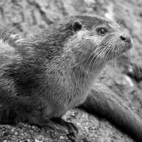 The Contentious Otter Reborn ( @BloggingOtter ) Twitter Profile