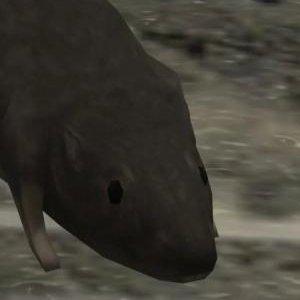 Halo 3 Rat Profile