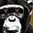 Infinite Monkey's Twitter avatar