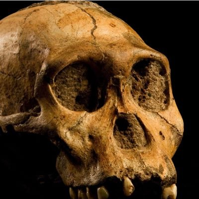 💀Transitional Fossil💀🇺🇸