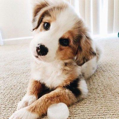 Puppy Power (@pupp1es4days) Twitter profile photo